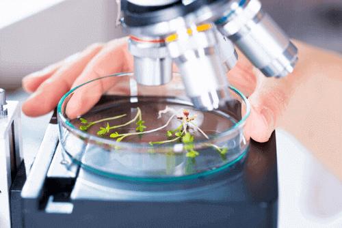 prova famerp 2020 biologia