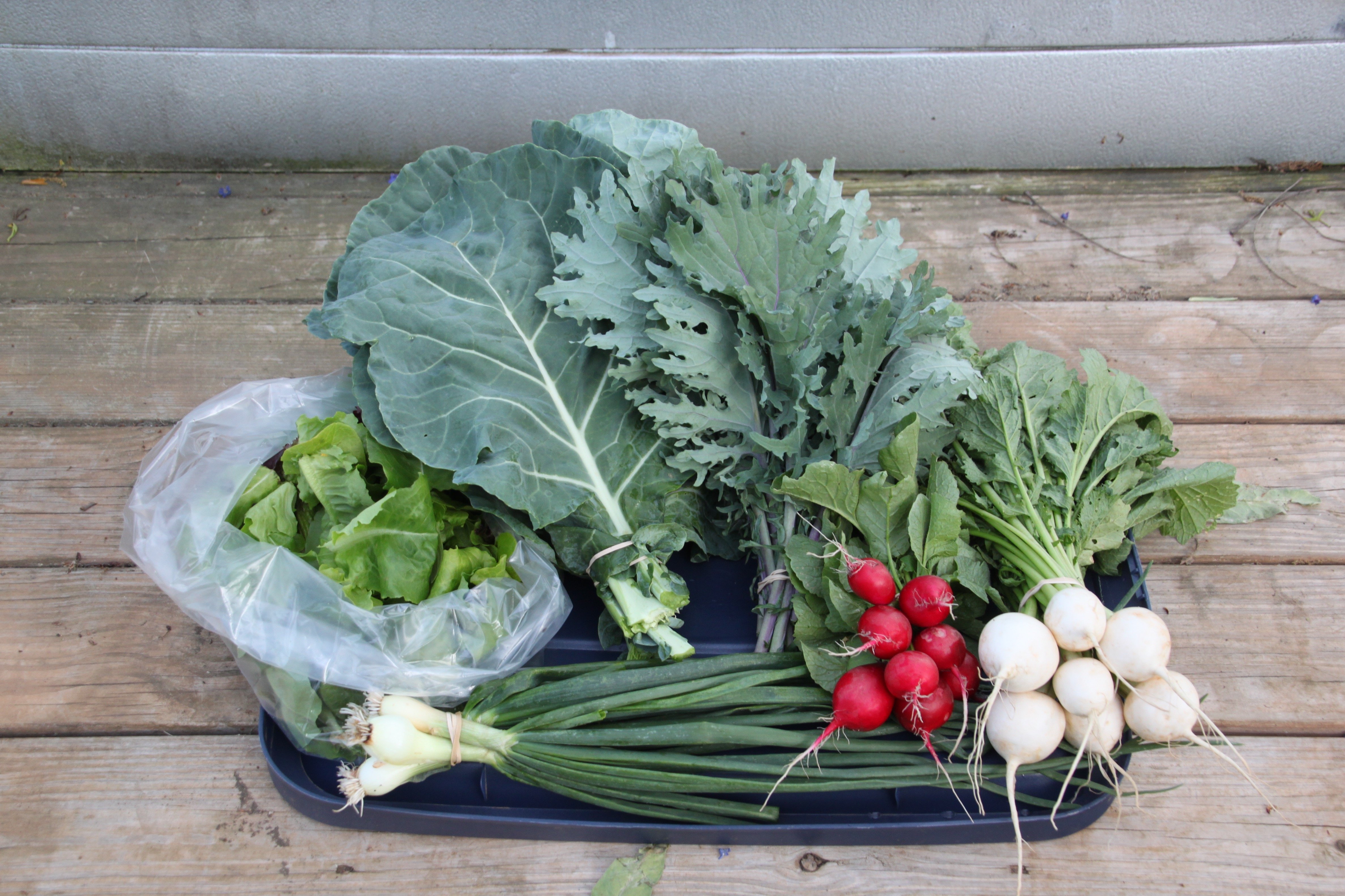 Fall Gardening Basics