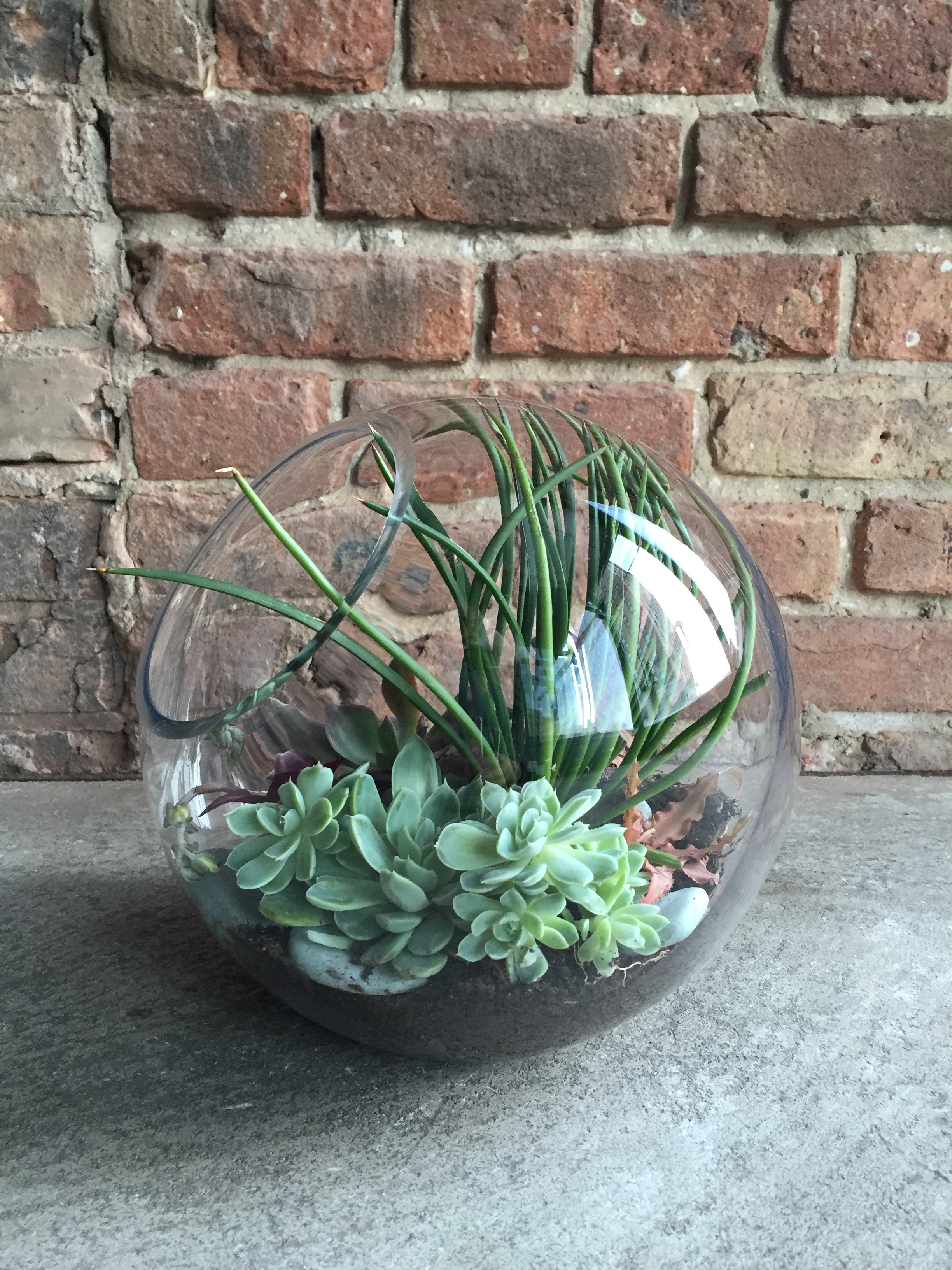 Terrarium Design Workshop