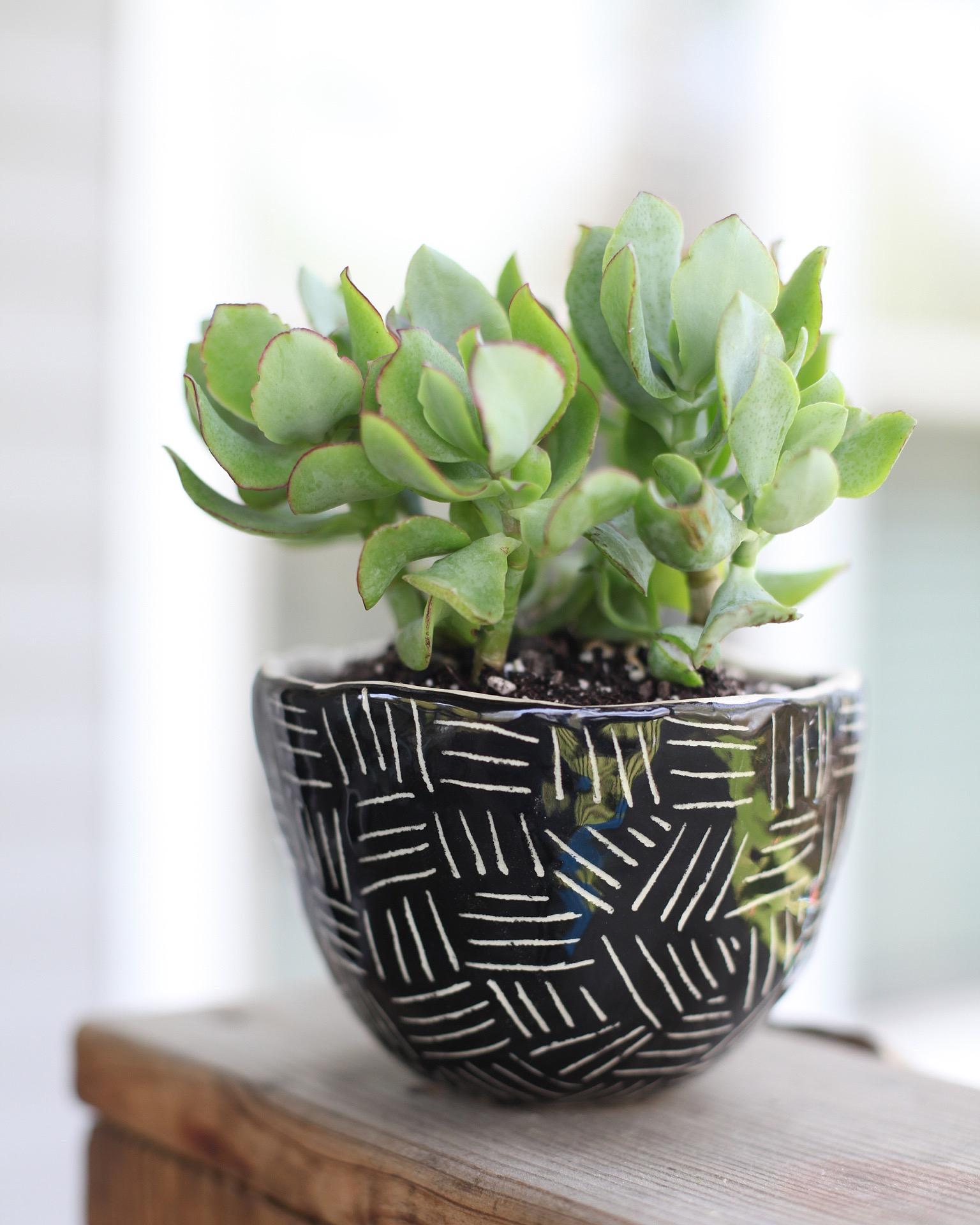 Ceramic Planter Glaze & Design
