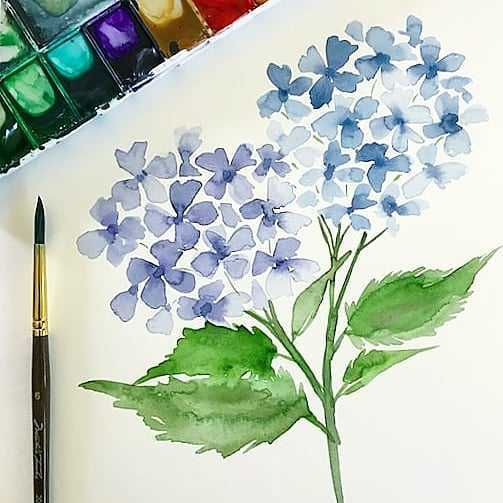 Watercolor Hydrangea Workshop