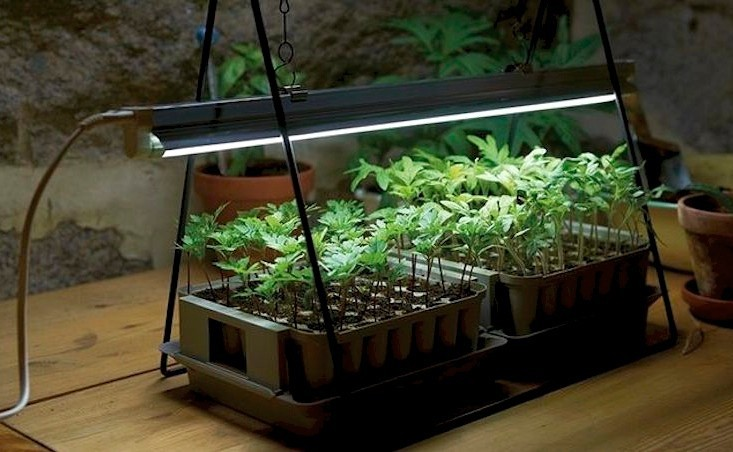 greenhouse growing lights lighting light power for in led clip item plant ac red blue bulb switch garden leds grow hydroponic with