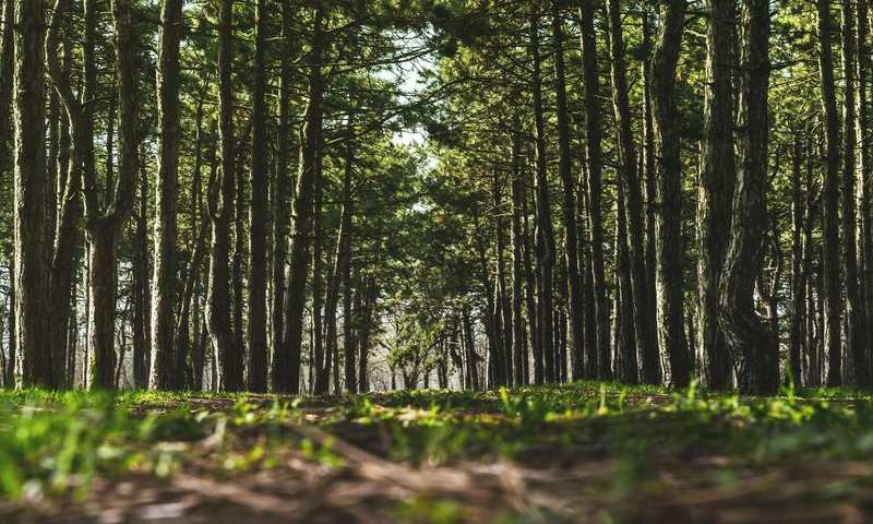 Forest Bathing: Η Θεραπεία Που Πρέπει Να Δοκιμάσεις