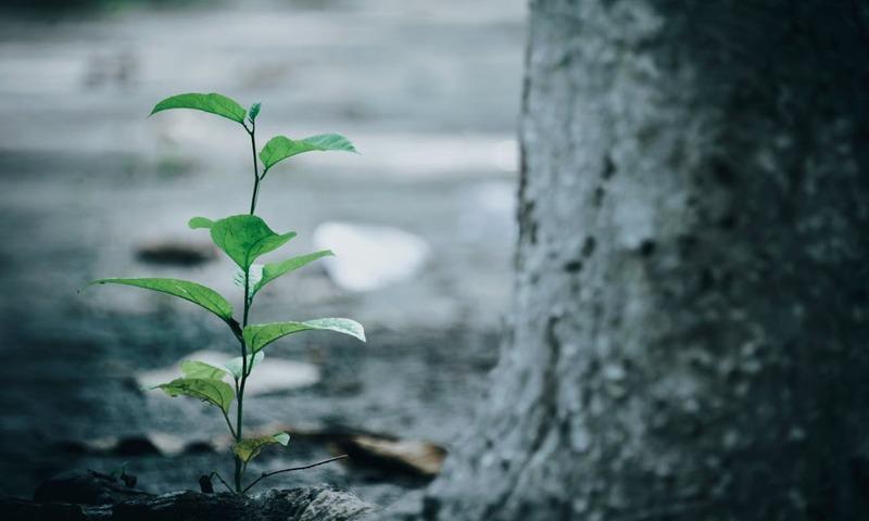 Το Δέντρο Που Ονομάζεται «Εμείς»