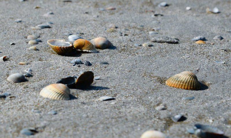 Πάρε Μέρος Στον Καθαρισμό Ακτών Και Κάνε Κάτι Καλό Για Το Περιβάλλον