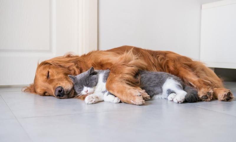 Τι Αποκαλύπτει Η Γάτα Ή Ο Σκύλος Σου Για Σένα;