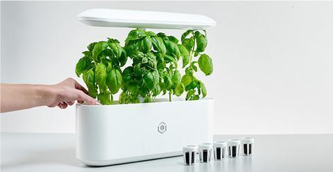 horticulture - herb garden - indoor gardening - indiegogo - Luxury Gifts for Mom - Luxury Mother's Day Gifts - Luxury Gifts for Her