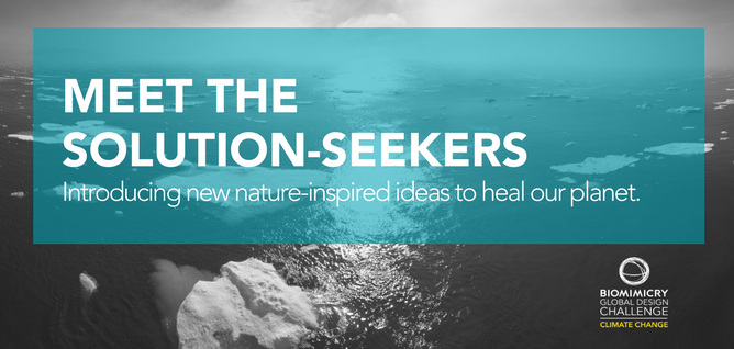 Meet the biomimicry solution-seekers