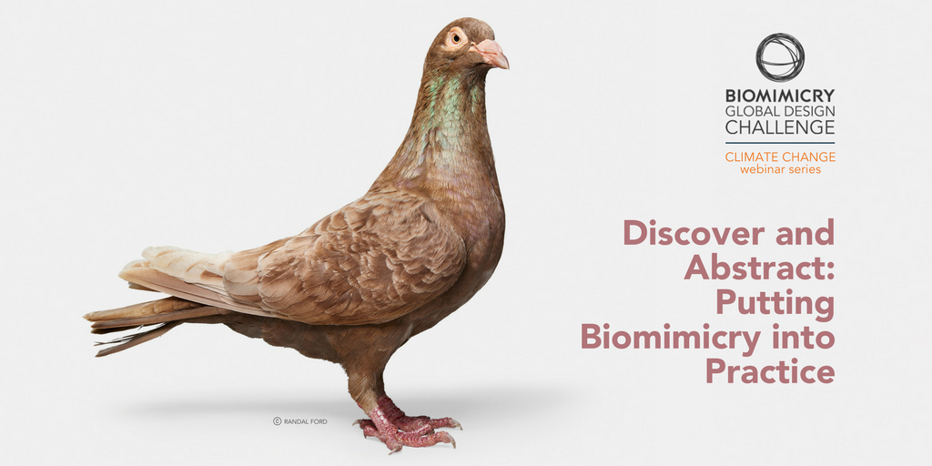 New webinar! Learn how to put biomimicry into practice.