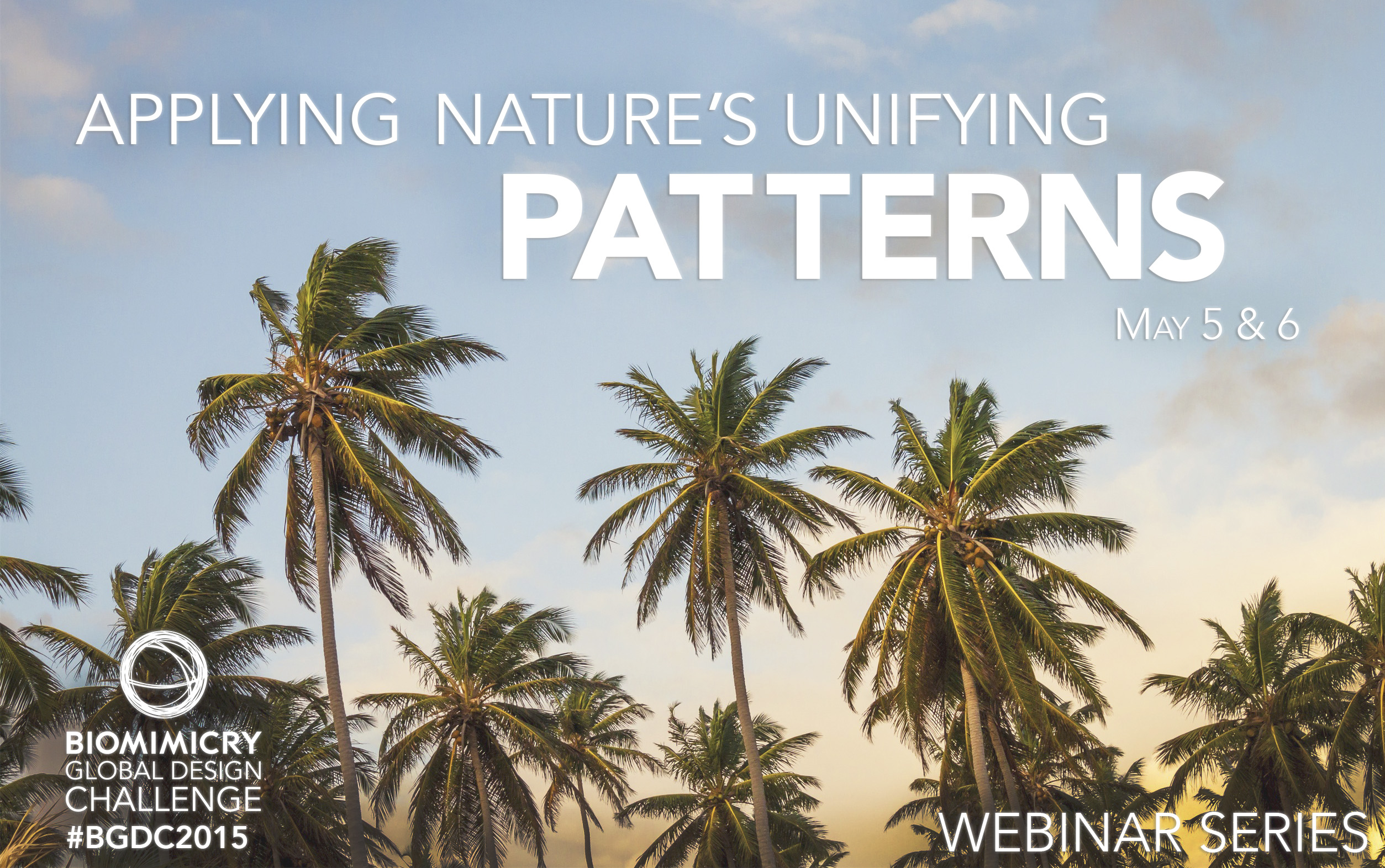 How can nature's patterns inspire your innovation?