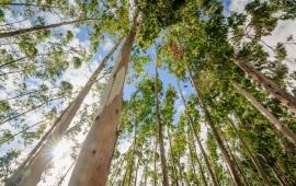 """Dall' Australia grafene """"verde"""" ottenuto grazie alla corteccia"""