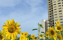 Città verdi, obiettivo sostenibile della Ue
