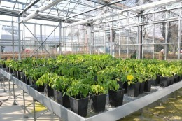 La macchina del tempo per le piante
