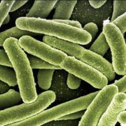 Eolico lillipuziano: i batteri potrebbero costruire micro wind farm