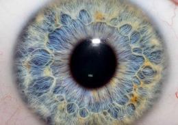 La retina hi-tech (italiana) che restituirà la vista a chi l'ha persa