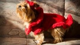 Червоне плаття для собак. Одяг для тварин. Одяг для Йоркширських терєрів