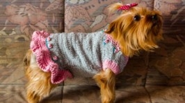 Сіро рожеве плаття для собак. Одяг для тварин. Одяг для Йорків.