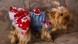 Джинсове плаття для собак. Одяг для собак. Костюм для собак. Ручна робота