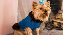 Теплий светр для собак. Синій светр для собак. Одяг для собак. Ручна робота