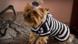 Чорно біле плаття для собак. Одяг для собак. Вязаний одяг для собак.