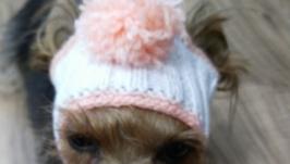 шапочка для малих собак