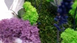 кашпо с живыми цветами