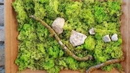Картина з моху.