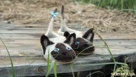 Валяные тапочки Сиамские коты