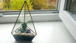 Флораріум-піраміда із сукулентів