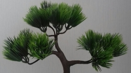 Сувенирное дерево Бонсай.