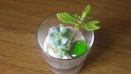 Композиція із живих рослин сукулентів у скляній вазі