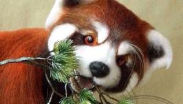 Пабу - малая панда или огненная лисица
