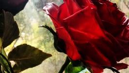 Роза (холодный фарфор) Керамическая флористика