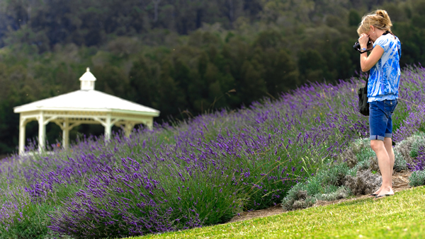 Lavender Farm, Haleakala Summit, Historic Makawao Town Tour