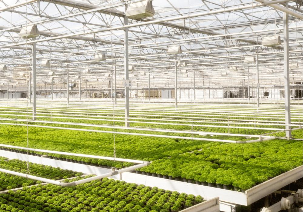 Greenhouse temperature monitoring