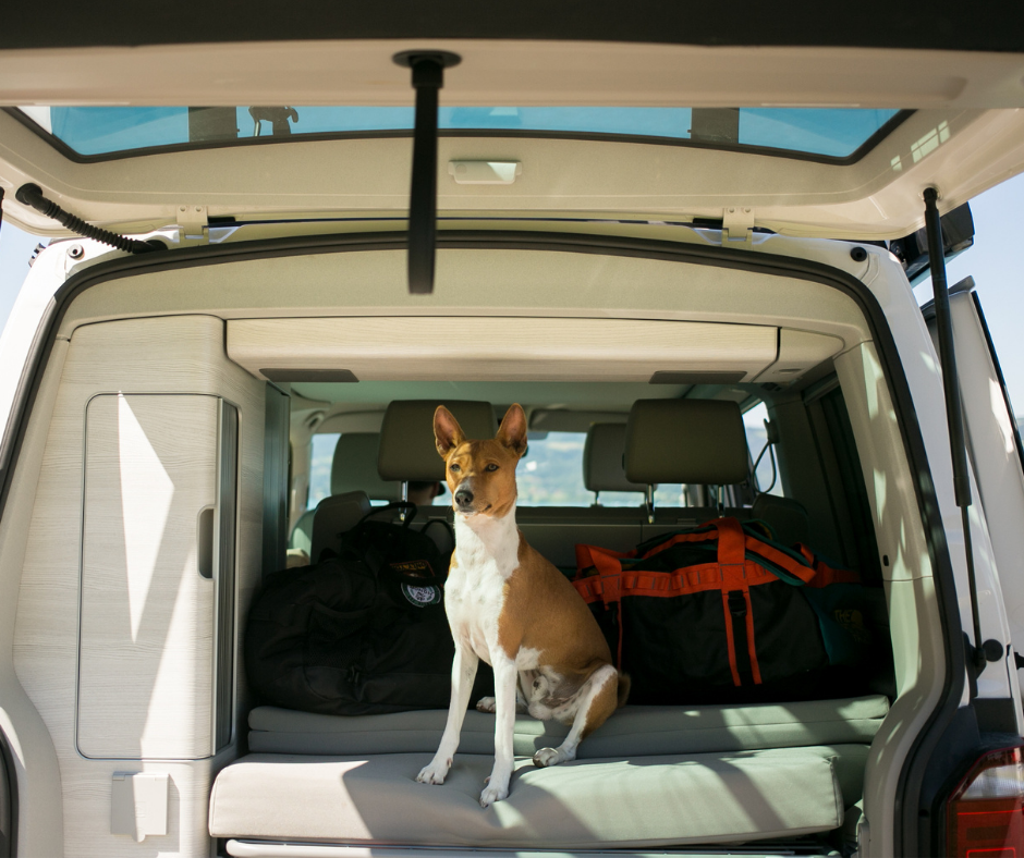Best Online Resources For RV Traveling with Pets