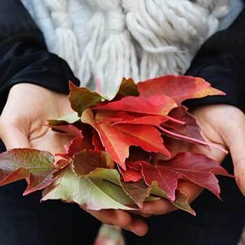 Autumnleaves square