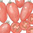 Tomato: Roma image