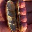 Peanut: Tennessee Red image
