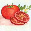 Tomato: Moskvich image