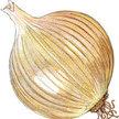 Onion: Valencia image