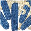 Corn: Hopi Blue Dent image