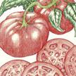 Tomato: Pink Brandywine image
