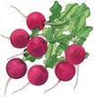 Radish: Pink Punch image