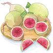 Radish: Watermelon image