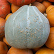 Squash, Winter: Sweet Meat image