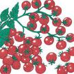 Tomato: Chadwick image