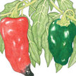 Peppers: Ancho Poblano image