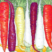 Carrot: Rainbow Mix image