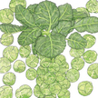 Brussels Sprouts: Nautic image